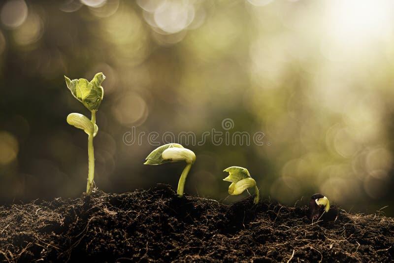 Jonge plant het groeien in backgro van ochtend lichte en groene bokeh stock afbeelding