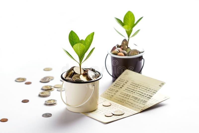 Jonge plant het groeien in glazenkruiken van muntstukken geeft bankboekje rekenschap, besparend geld, investering en financieel stock fotografie