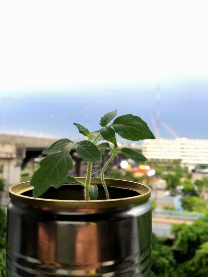 Jonge plant het groeien in kringloop kan royalty-vrije stock foto's