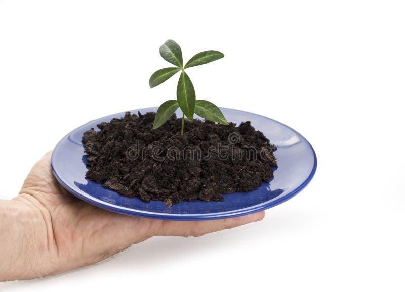 Jonge plant het groeien op de plaat Het nieuwe leven of nieuw beginconcept royalty-vrije stock afbeelding