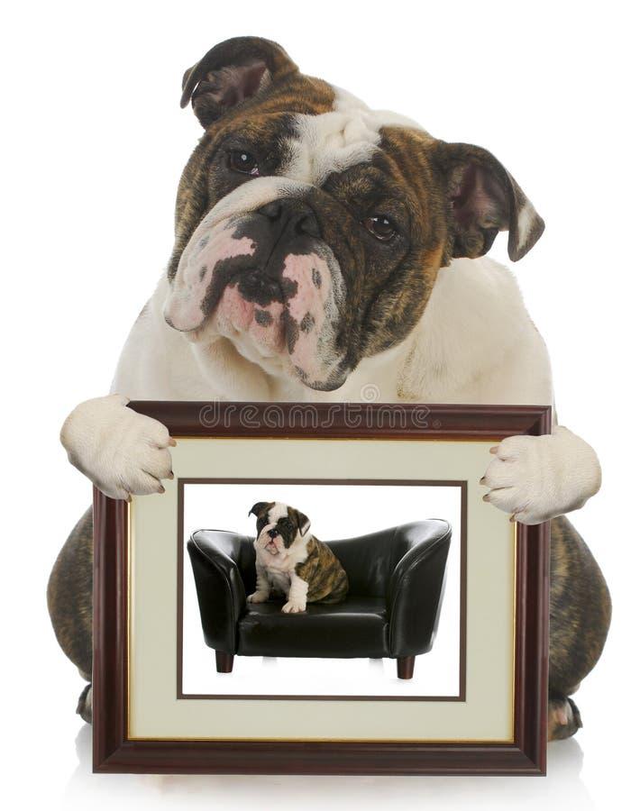 Jonge puppy gekweekte hond stock afbeelding