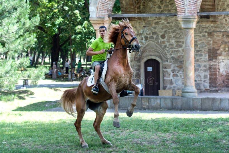 Jonge ruiter op het springen paard op weide in aard stock foto's