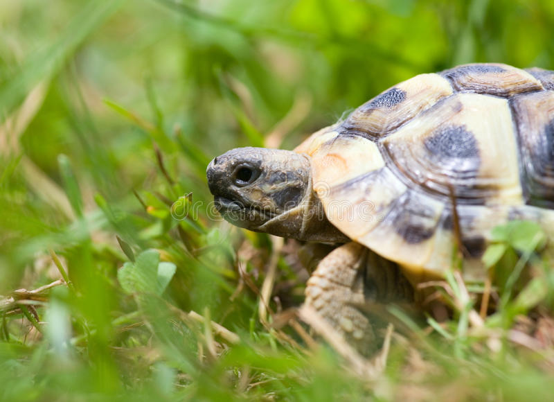 Jonge schildpad stock foto's
