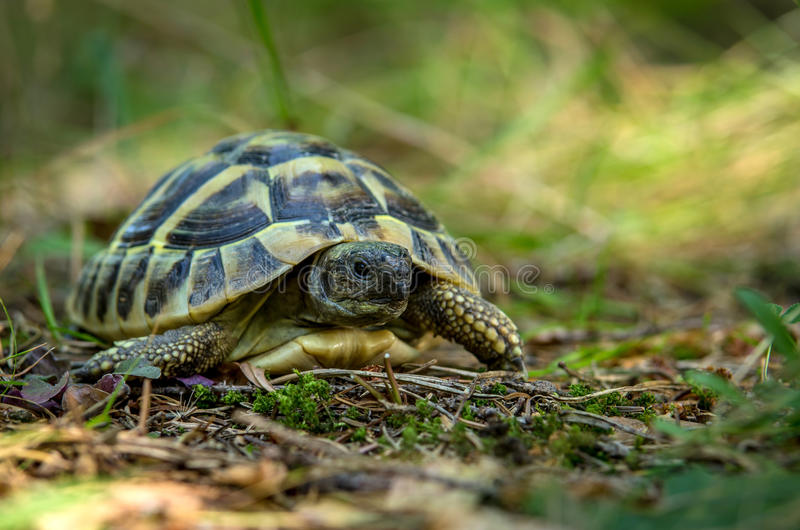 jonge schildpadden van de wilde aard royalty-vrije stock foto