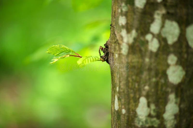 Jonge spruit van boom komst van de boomboomstam stock fotografie