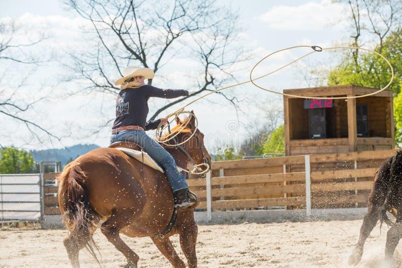 Jonge veedrijfster die een mooi verfpaard in een vat het rennen gebeurtenis berijden bij een rodeo royalty-vrije stock afbeelding