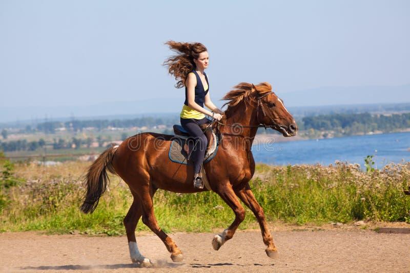 Jonge veedrijfster op bruin paard royalty-vrije stock foto's