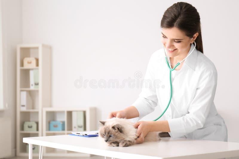 Jonge veterinaire het onderzoeken kat royalty-vrije stock foto's
