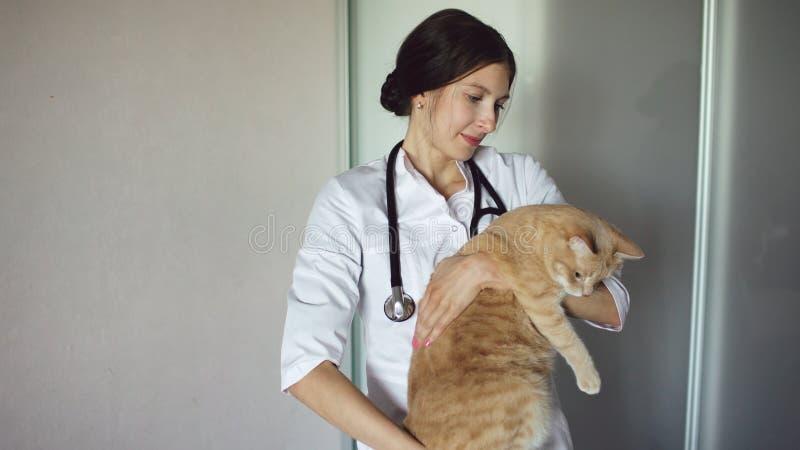Jonge veterinaire vrouw met de kat van de stethoscoopholding in dierenarts medisch bureau royalty-vrije stock afbeelding