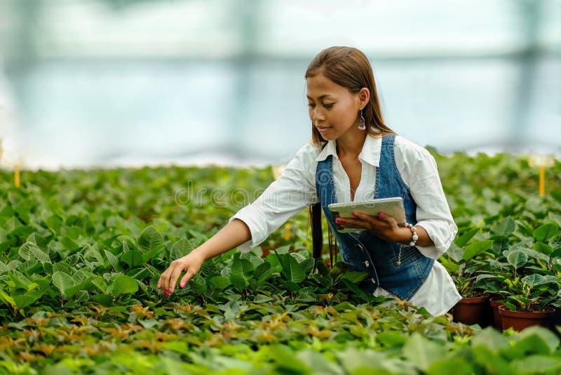 Jonge vrij Aziatische vrouwenagronoom met tablet die in serre werken die de installaties inspecteren stock fotografie