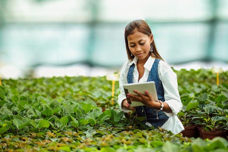 Jonge vrij Aziatische vrouwenagronoom met tablet die in serre werken die de installaties inspecteren stock afbeeldingen