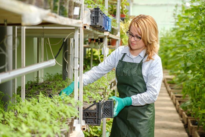 Jonge vrouw aan het werk in serre Serreopbrengst Voedselproductie royalty-vrije stock foto
