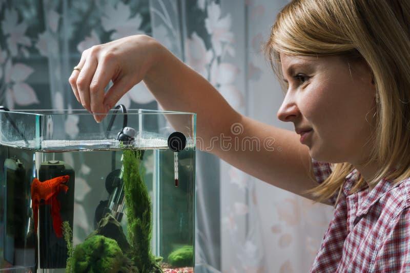Jonge vrouw die bètavissen in aquarium thuis voeden stock foto's
