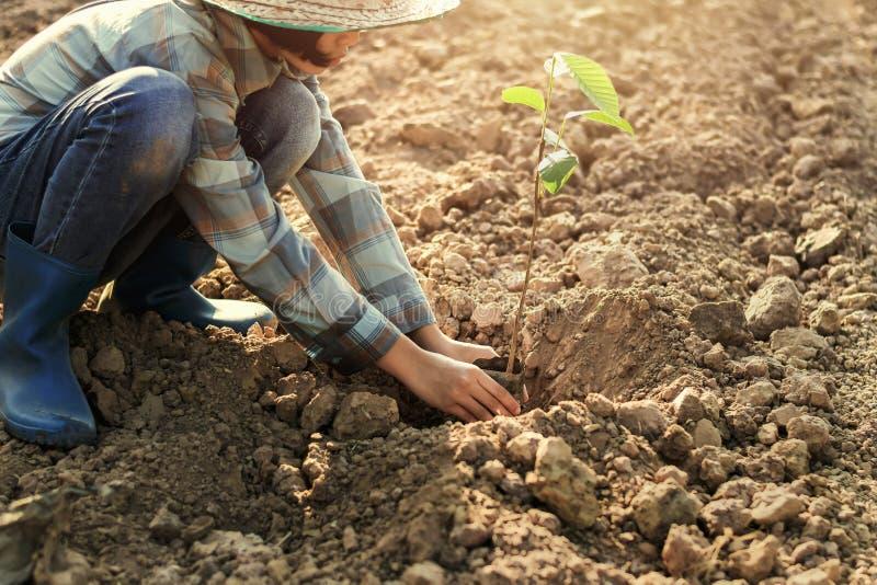 jonge vrouw die de boom in tuin planten concepteneco royalty-vrije stock foto's