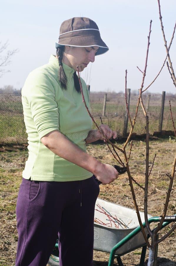 Jonge vrouw die in de tuin werkt stock fotografie