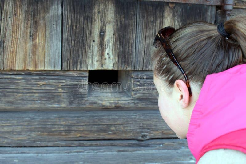 Jonge vrouw die door gat in oude logboekmuur kijken stock fotografie