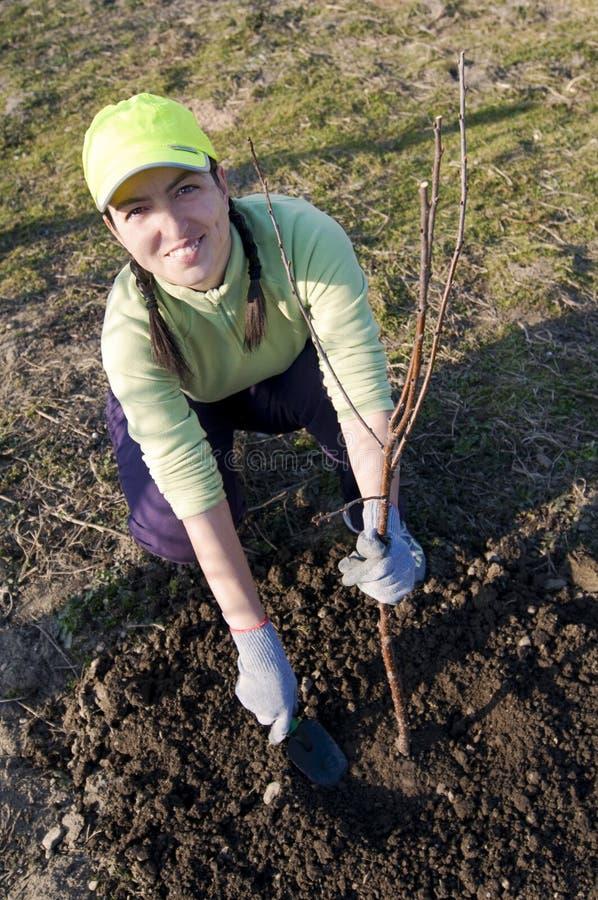 Jonge vrouw die een boom plant royalty-vrije stock afbeeldingen