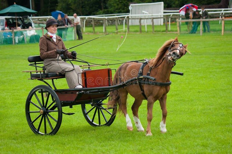 Jonge Vrouw die een paard en een vervoer drijft stock foto