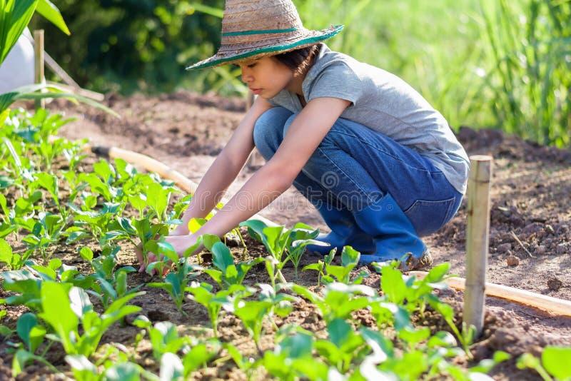 jonge vrouw die groente planten stock foto's