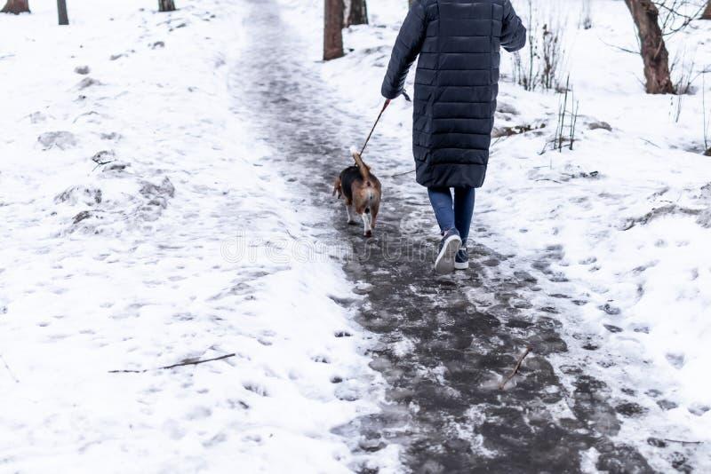 Jonge vrouw die in het park met haar brakhond lopen in de wintertijd royalty-vrije stock foto