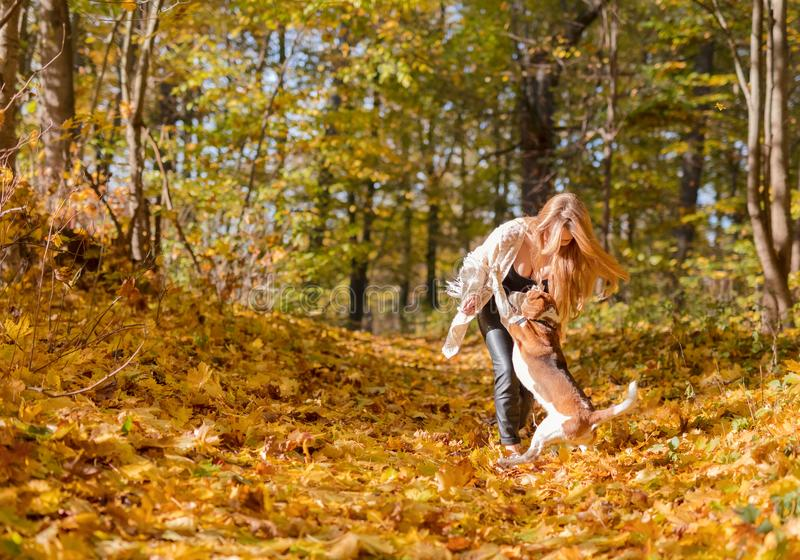 Jonge vrouw die met een brak in het de herfstpark lopen royalty-vrije stock afbeelding