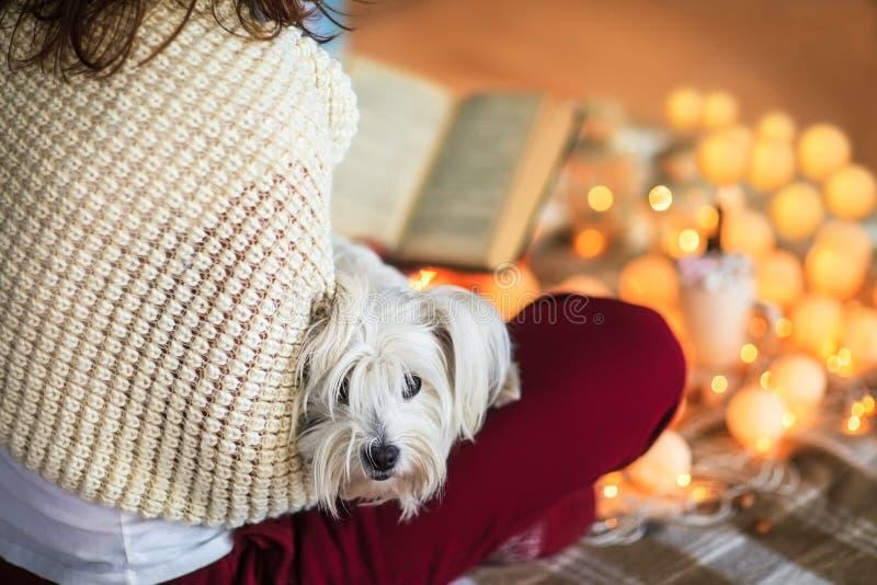 Jonge vrouw die thuis boek met hond op haar knieën lezen stock foto's