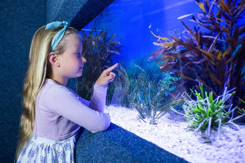 Jonge vrouw die vissen in tank richten stock afbeelding