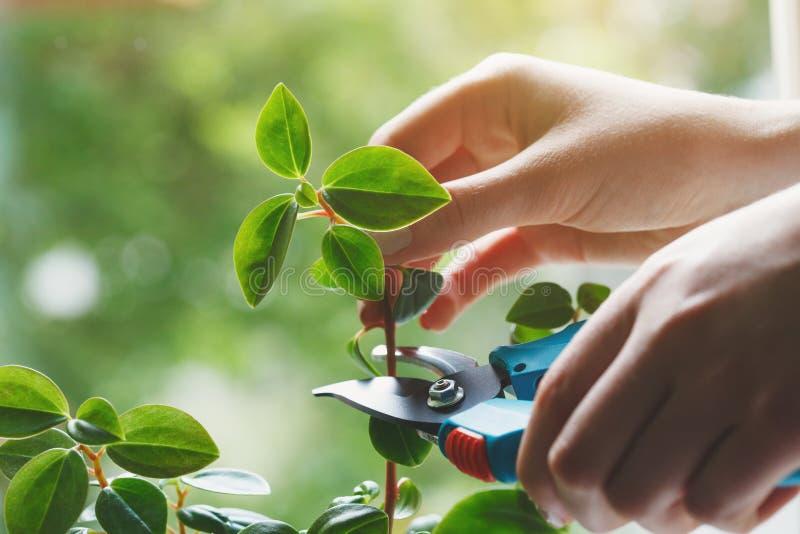 Jonge vrouw die zorg nemen en installaties, het concept van de huistuin kweken stock afbeelding