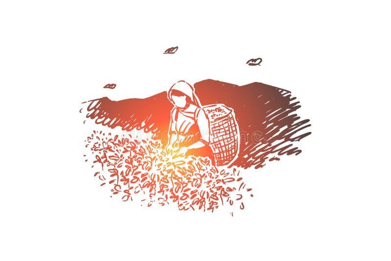 Jonge vrouw met mand, anonieme aanplantingsarbeider die verse bladeren, landbouw, vrouwelijk landbouwer het oogsten gebladerte ve stock illustratie
