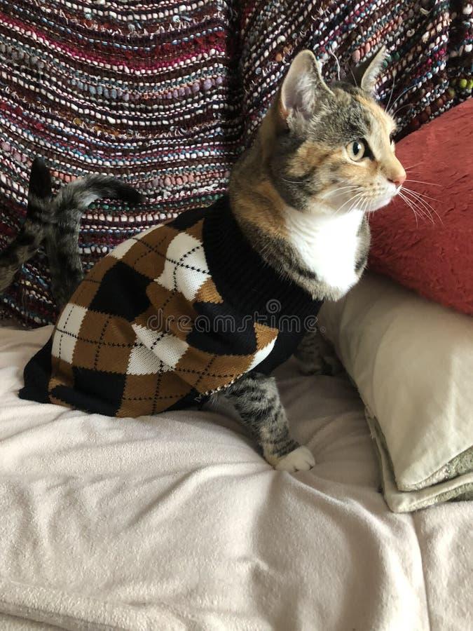 Jonge Vrouwelijke die Tortie-Kat in de Wintersweater wordt verpakt royalty-vrije stock fotografie