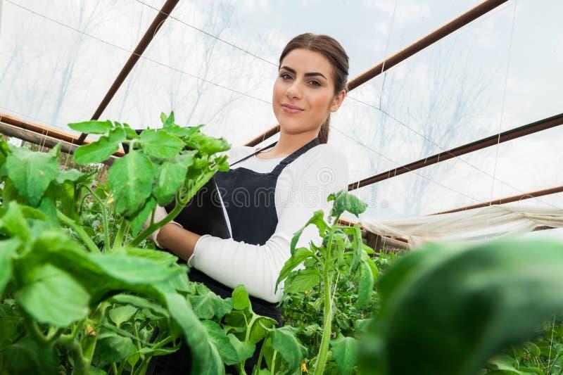 Jonge vrouwelijke landbouwingenieur het inspecteren installaties stock afbeeldingen