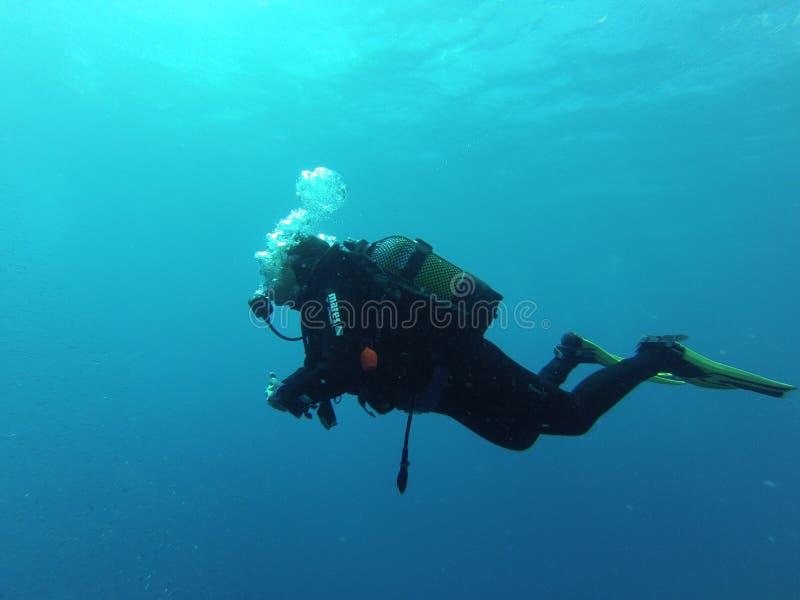 Jonge vrouwelijke scuba-duiker in de Atlantische Oceaan stock afbeeldingen