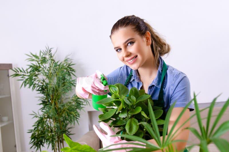 Jonge vrouwelijke tuinman met installaties binnen royalty-vrije stock afbeelding