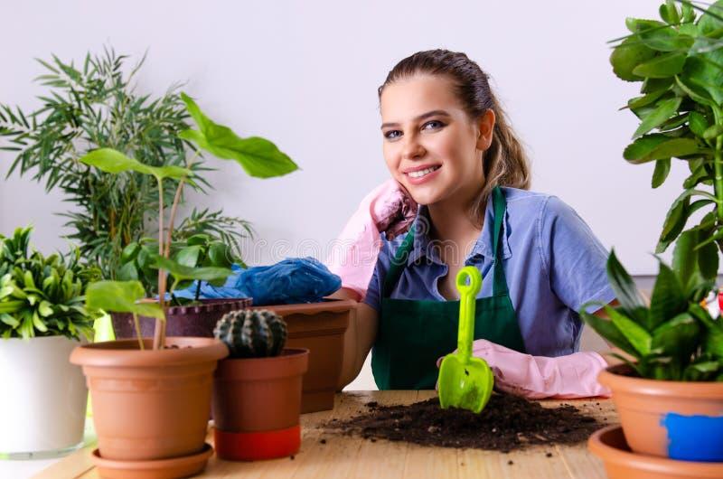 Jonge vrouwelijke tuinman met installaties binnen stock afbeelding