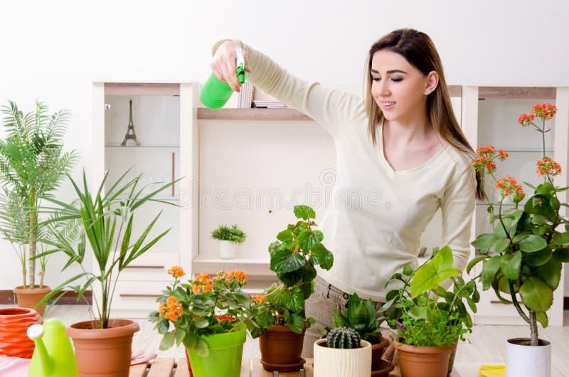 Jonge vrouwelijke tuinman met installaties binnen royalty-vrije stock foto's