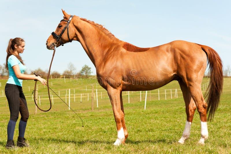 Jonge vrouwen berijdende trainer die rasecht kastanjepaard houden royalty-vrije stock foto