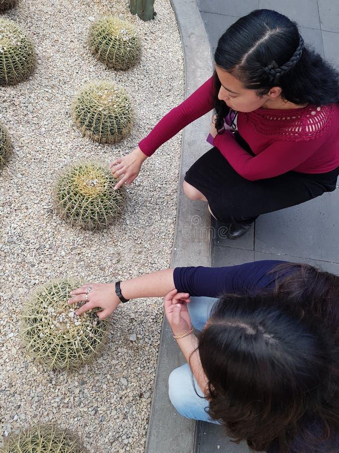 jonge vrouwen die de stekels van een cactusinstallatie spelen royalty-vrije stock fotografie