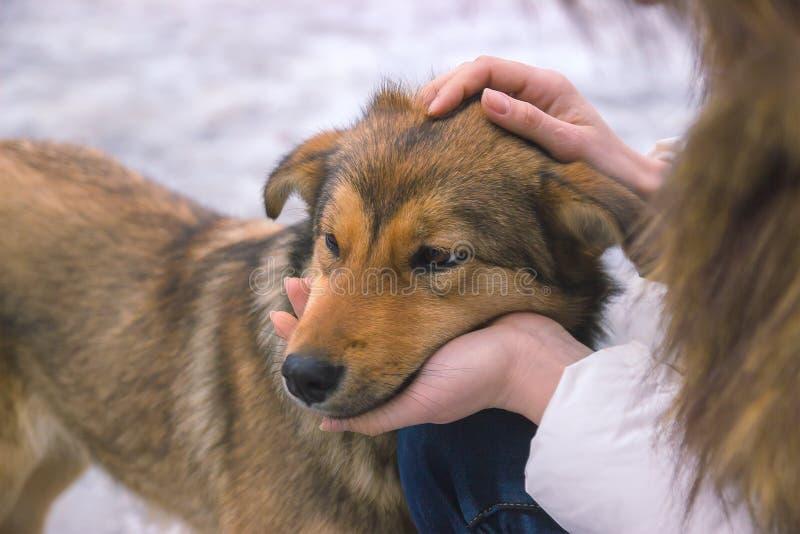 jonge vrouwenconsoles verstoorde hond een stil ogenblik van begrip royalty-vrije stock fotografie