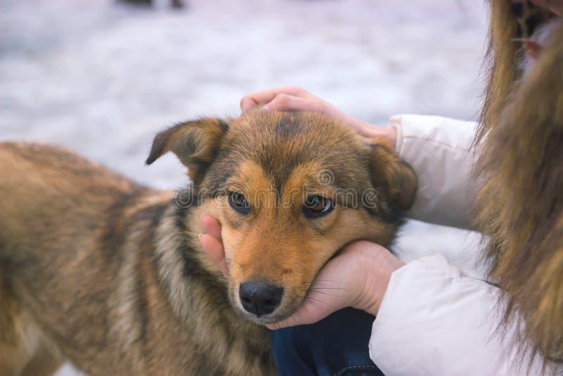 jonge vrouwenconsoles verstoorde hond een stil ogenblik van begrip stock afbeeldingen