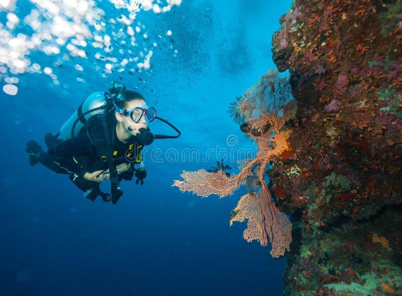 Jonge vrouwenscuba-duiker die koraalrif onderzoeken royalty-vrije stock foto's