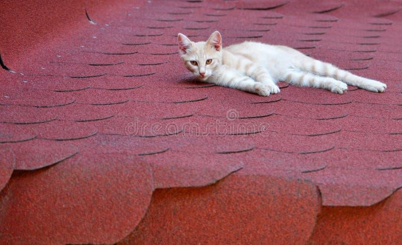 Jonge witte gestreepte kat stock fotografie
