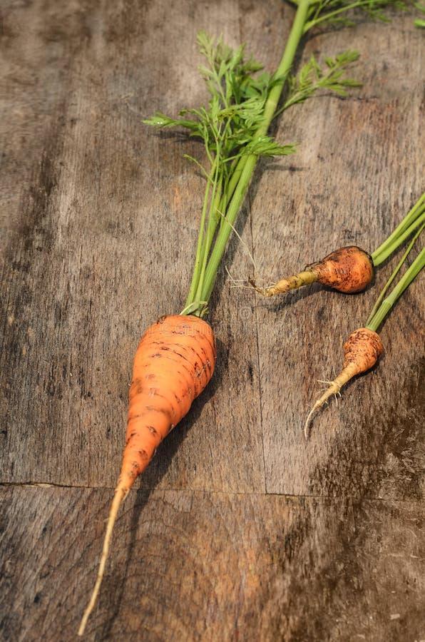 Jonge wortelen met bovenkanten stock foto