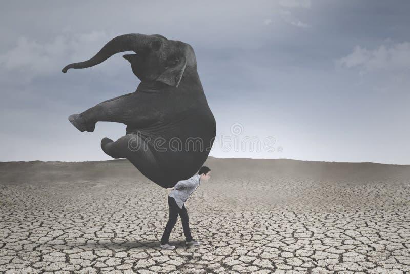Jonge zakenman met olifant op droge grond stock foto