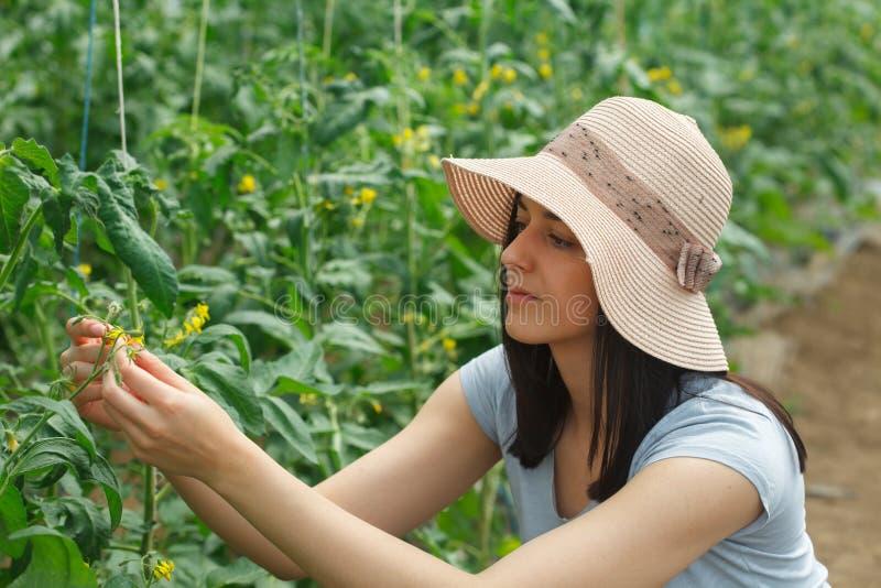 Jongelui, beautufull vrouw met een hoed die in een serre werken stock foto