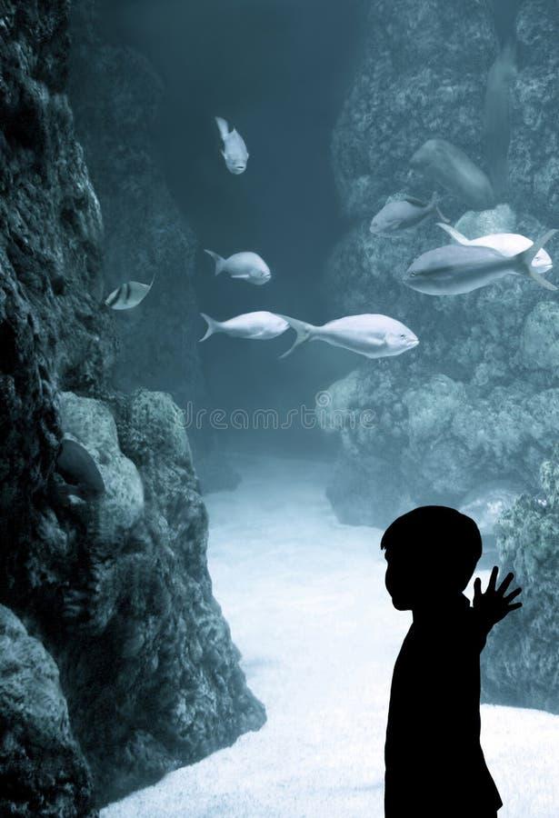 Jongen bij het aquarium stock fotografie
