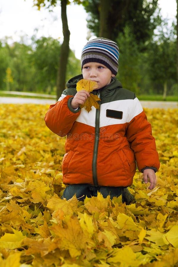 Jongen in de herfstgebladerte royalty-vrije stock fotografie