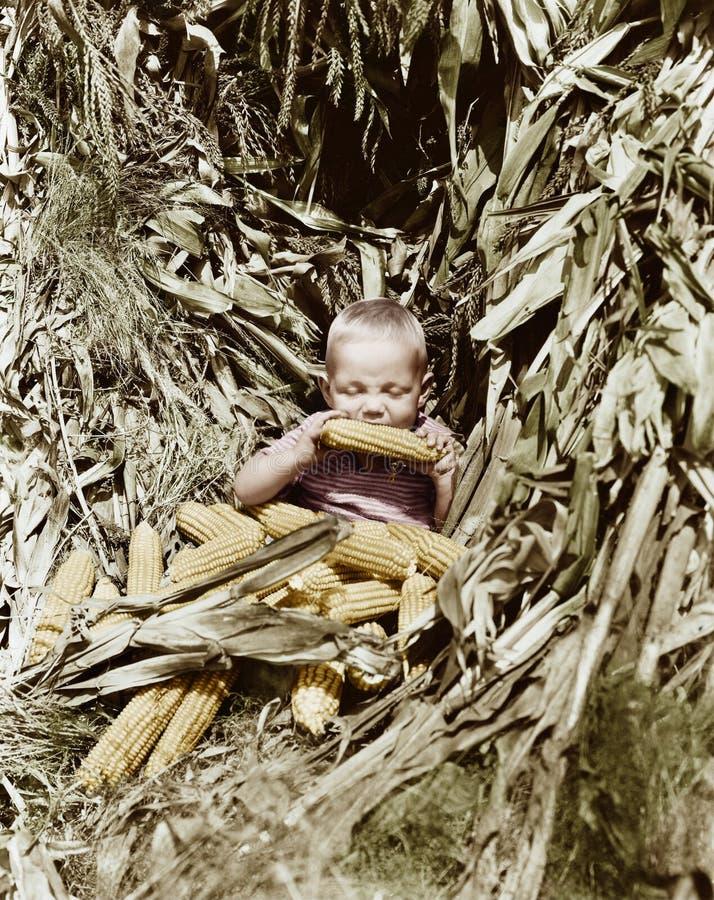 Jongen die een maïskolf op een graangebied eten (Alle afgeschilderde personen leven niet langer en geen landgoed bestaat Leveranc stock fotografie