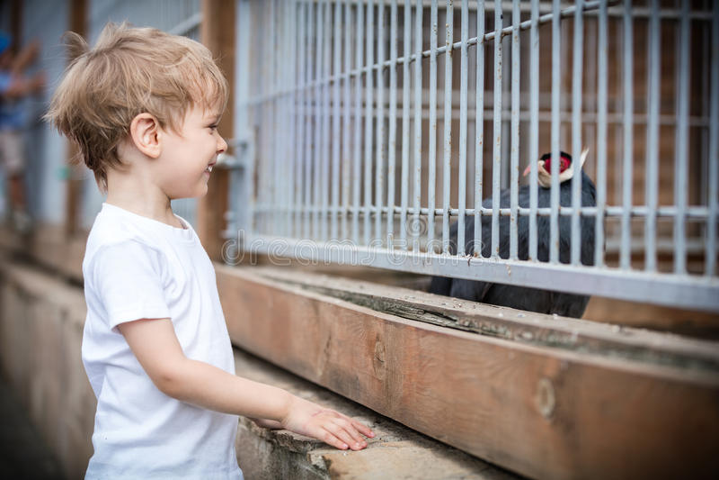 Jongen die fazant in een dierentuin bekijken royalty-vrije stock fotografie