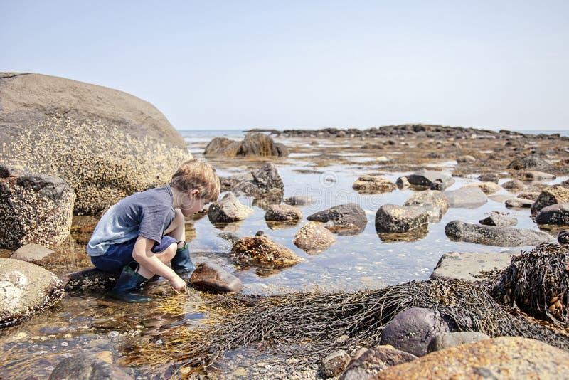 Jongen die getijdenpools op New Hampshire-kust onderzoeken stock foto's