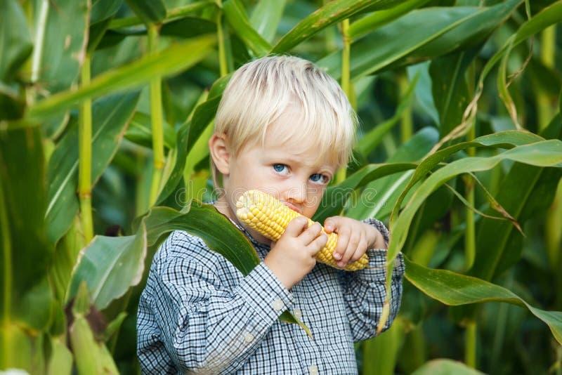 Jongen die Maïskolven eten royalty-vrije stock foto